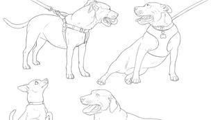 Canine Line Work