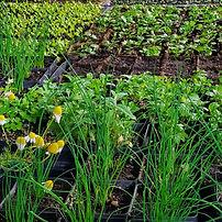 seedling-variety.jpg