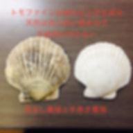 ホタテ貝,貝殻焼成カルシウム,トモファイン