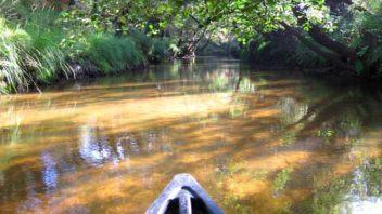 mesplet-mios-canoe-leyre-nature-decouver