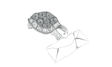 brodeuse-tortue-contact_edited_edited.pn