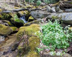 BCB Wasabi in the Creek