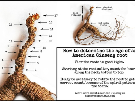 How to Age Wild American Ginseng Roots