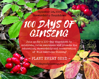 100 Days of Ginseng.png