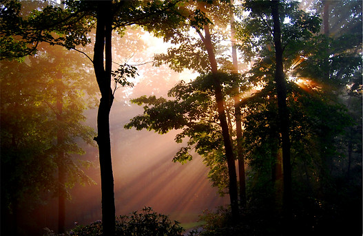 forestlight sm.jpg