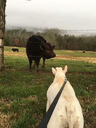 farmdog1.jpg