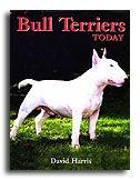 bull_terrier_today.jpg