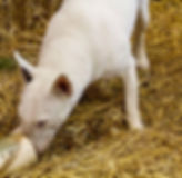 barnhunt2.jpg