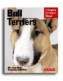 bull_terriers.jpg