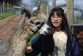 girl and alpacas- Alpaca Country Estates friendly babies