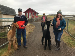 Mom_and_Dad's_turn_to_walk_the_alpacas-C