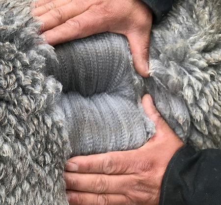 ESTATES MASQUERADA II-2021-Fleece-Amazin