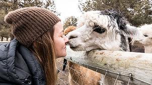 Alpaca Day (5 of 36).jpg
