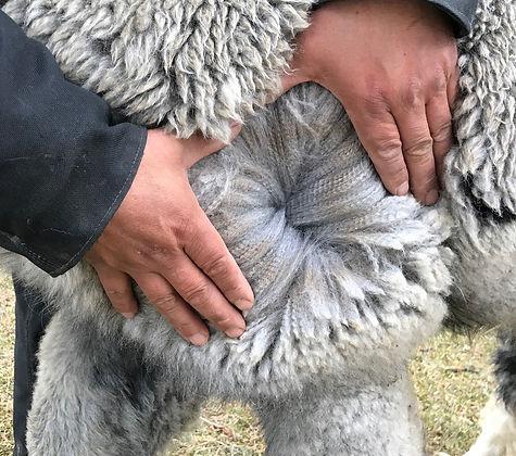 ESTATES MASQUERADA II-2021-Fleece at Leg