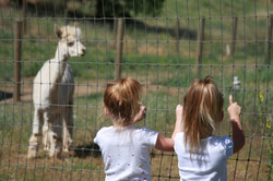 Alpaca Farm June 2010 114