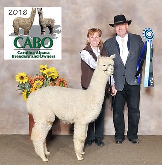 Estates Arctic Beauty-Carolina Alpaca Ce