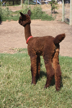 Katrina or Cria 2
