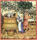 Виноград в Среднем Поволжье