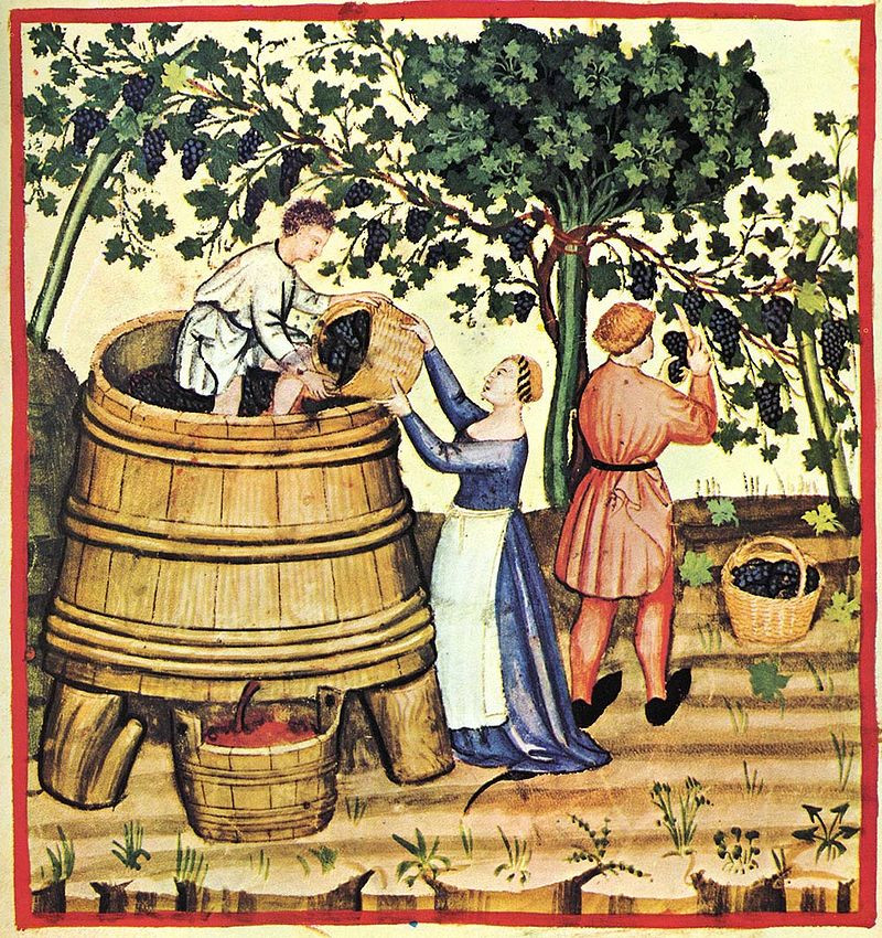история винограда