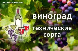 Технические сорта винограда - Хуторок63