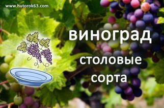 Виноград Столовый - Хуторок63