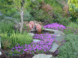 Old Stone Cottage garden pond surrounded by Temari verbena