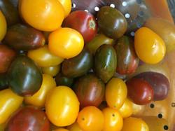 Seasonal Tomatinia