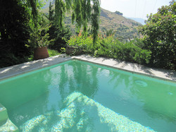 Salix (Weeping willow) over the pool
