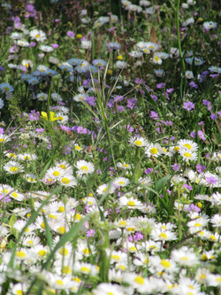 Spring Meadow in Evia