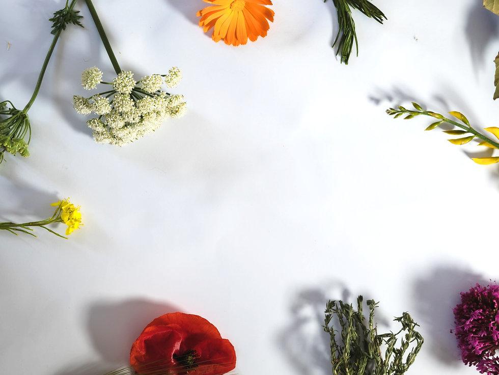 fondo bianco con fiori