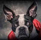2 -  WOF - William Ochoa - Mascotas.jpg
