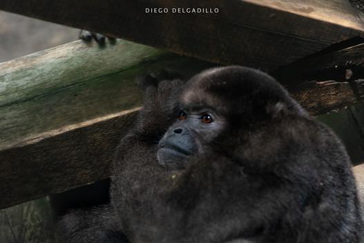 Diego Delgadillo