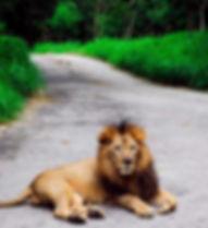 276943-lion-2675458_960_720.jpg