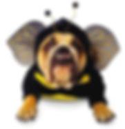 dogs in costume 1.jpg