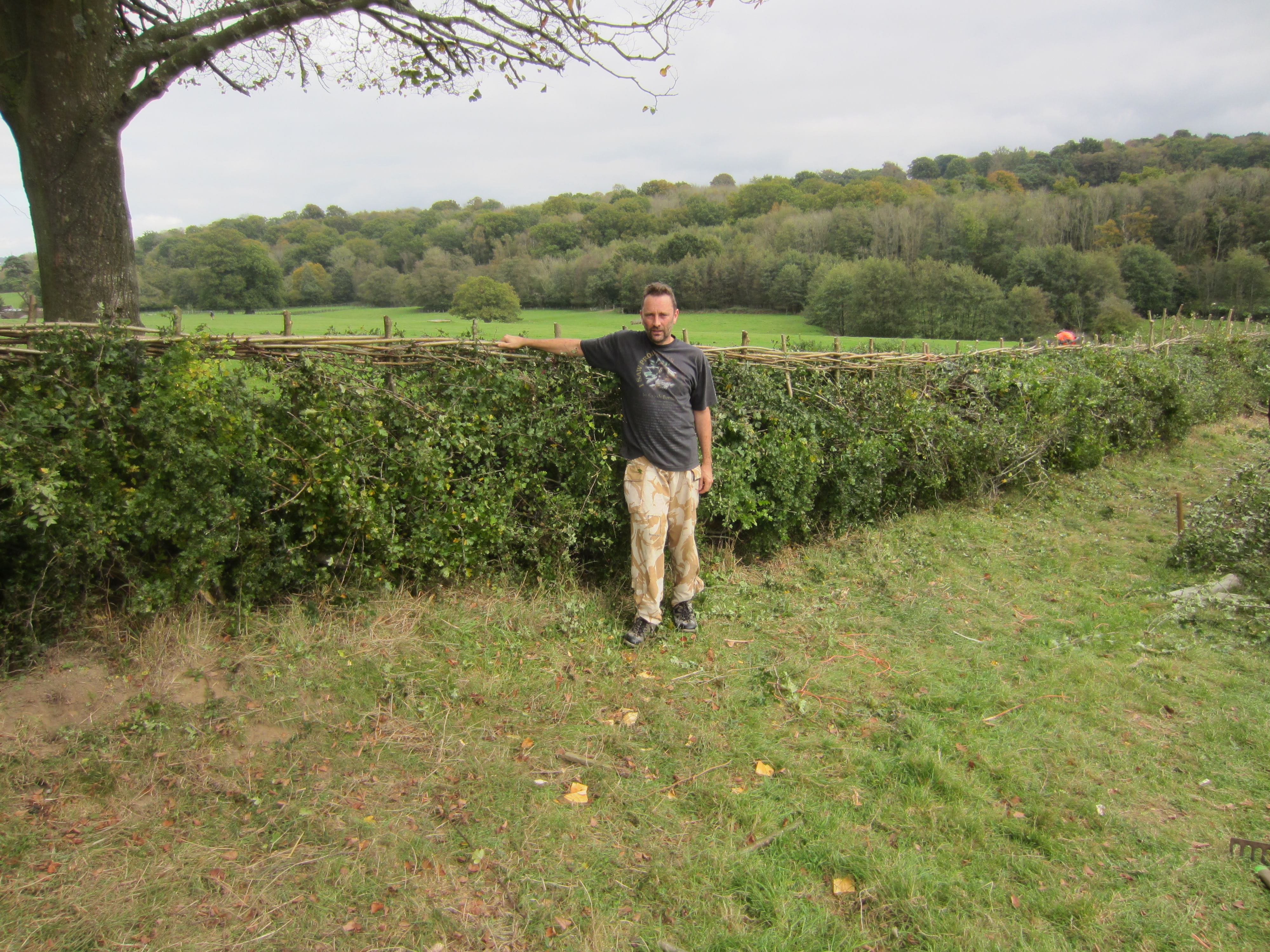 Scotney Hedge After