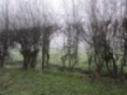 Gappy hedge