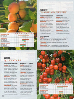Abricot - Cerise