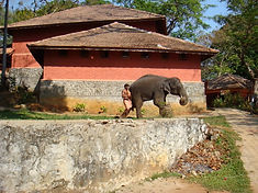 Konni Elephant Training Centre.jpg
