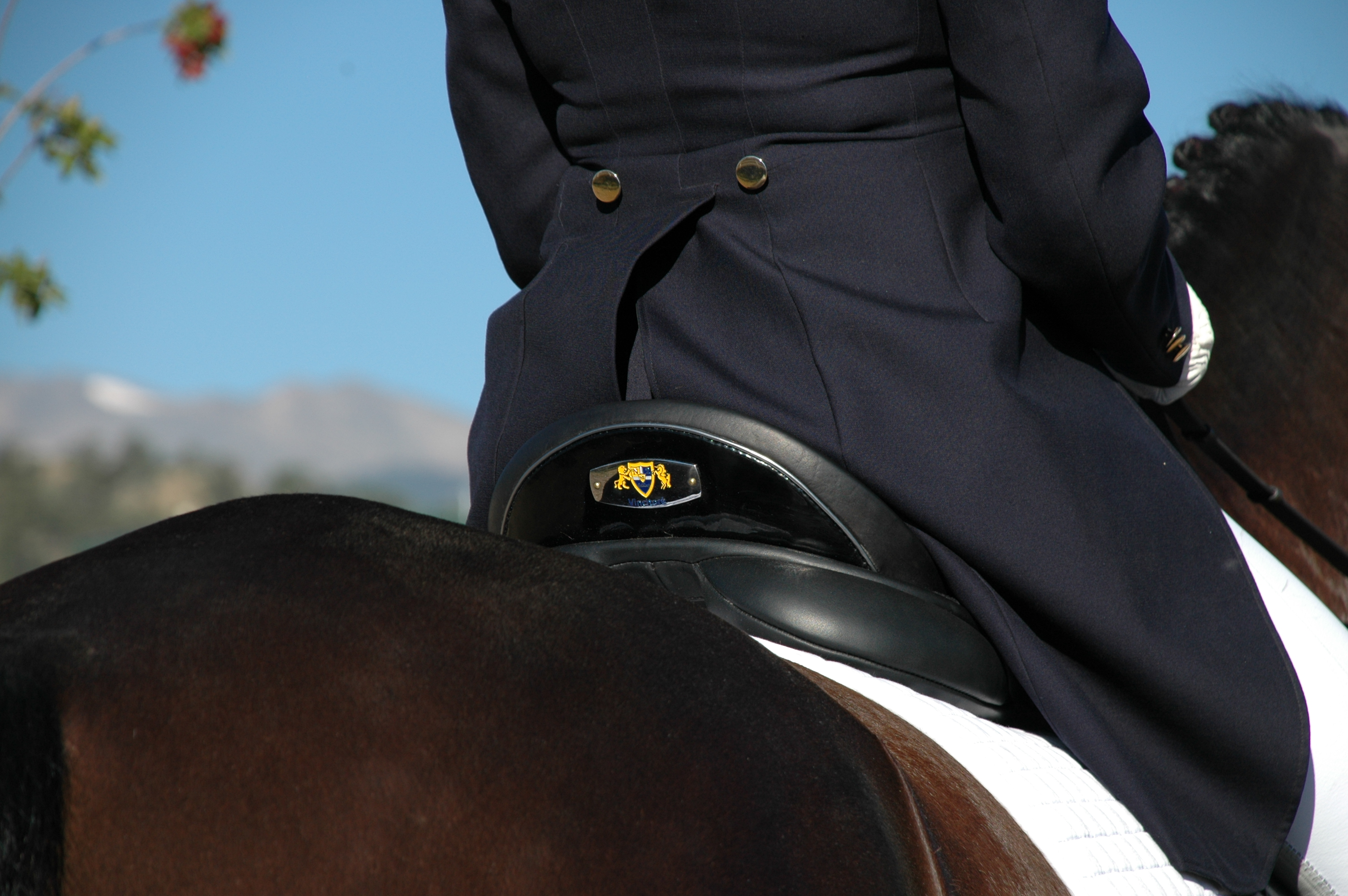 N2 Saddle (3)