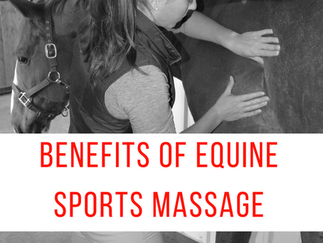 The Benefits of Equine Sports Massage