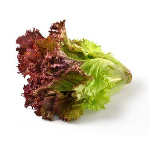 RED LEAF LETTUCE (3-4 Pcs/Kg)