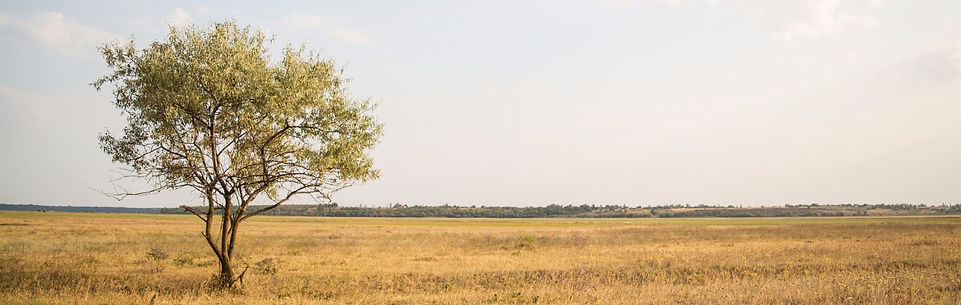 lone treebackground