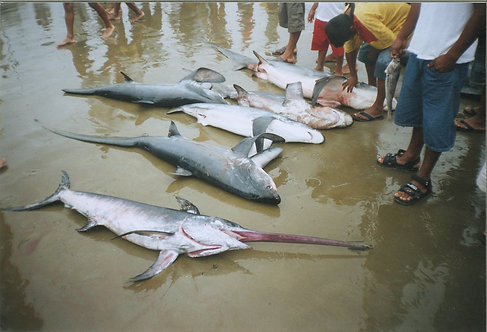 Shark Bycatch Reduction Donation