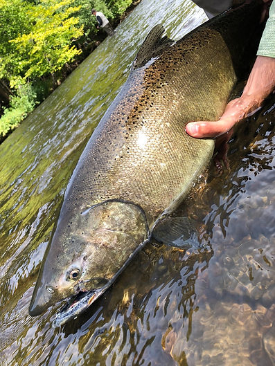 Salmon River Fly Fishing Guide