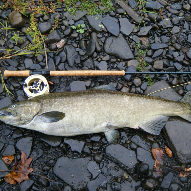 Salmon River Fly Fishing King Salmon