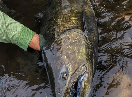 Salmon Run Anticipation 2019 - Pulaski, NY
