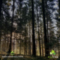 GREEN MOTION SOLUTIONS est un partenaire de ECOTREE et devient propriétaire forestier