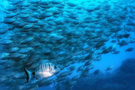 Madeira Diving Center_edited.jpg