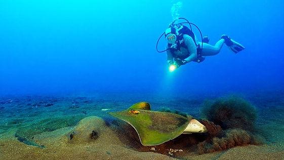 Manta Diving Center_edited.jpg
