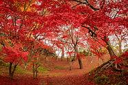 秋の風景写真,青森,あおもり,絶景風景,風景写真,八島和浩,青森県,奥入瀬渓流,八甲田山,青池,白神山地,仏ヶ浦,蔦沼
